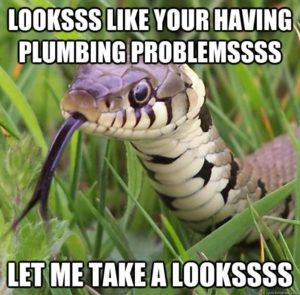 Looks-Like-Your-Having-Plumbing-Problems-Let-Me-Take-A-Looks-Funny-Snake-Meme-Image.jpg