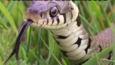 Looks-Like-Your-Having-Plumbing-Problems-Let-Me-Take-A-Looks-Funny-Snake-Meme-Image.jpg