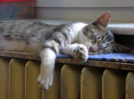 Illustration for How to get rid of radiator sludge shows a cat asleep on a presumably warm radiator!
